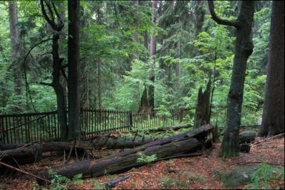 Ochranné pásmo lesa mapa
